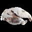 Cabeza Porco Celta
